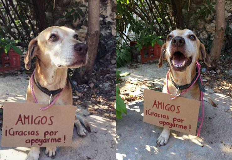 Usuarios de las redes sociales pagan quimioterapia de un encantador perrito